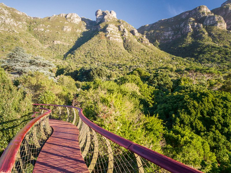 The Kirstenbosch exhibit at the annual Chelsea Flower Show has won 29 gold medals in 33 appearances. Photograph: Adam Harrower
