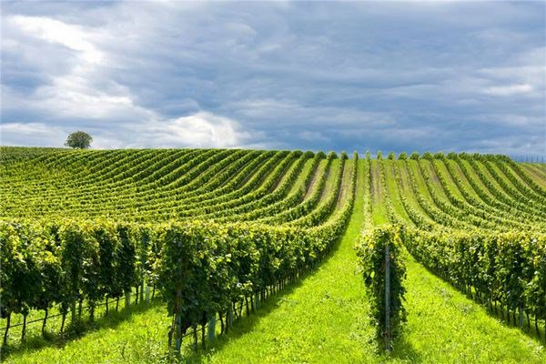This 70-hectare estate in Bordeaux is a commercial vineyard and wine-producing estate complete with exceptional facilities and numerous residences.