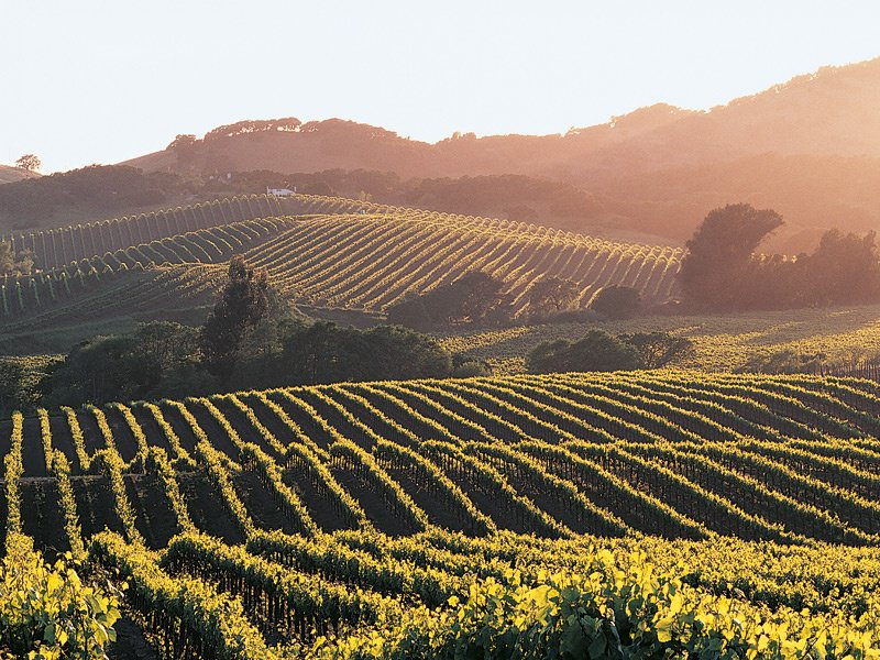 There is a special appeal to owning your very own piece of wine-producing land, and the Napa Valley has become a popular choice among celebrities and investors. Photograph: Getty Images