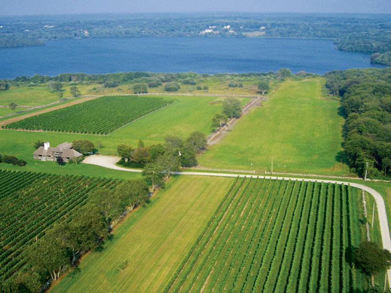 """Sakonnet Vineyards in Rhode Island produce wines under the Southeastern New England appellation. Its vines cover more than 37 acres of """"estate grown"""" wine every year."""
