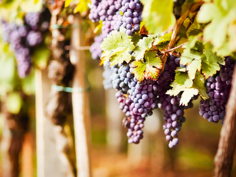 """""""There has never been a better time to buy a wine property in Bordeaux"""" says Michael Baynes of Vineyards-Bordeaux, an exclusive affiliate of Christie's International Real Estate. Photograph: iStock"""