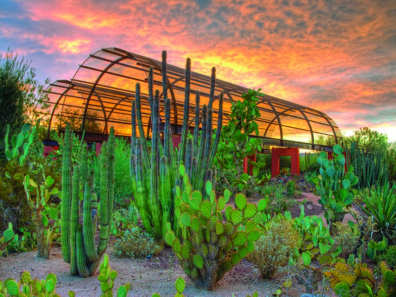 The 140-acre Desert Botanical Garden is a celebration of the flora of the desert and currently has more than 21,000 plants. Photograph courtesy of Scottsdale Convention & Visitors Bureau