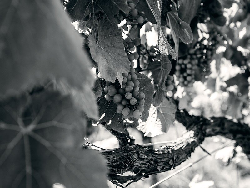 """Per Holmberg, Head of Christie's Wine Department, Americas, believes organic or natural winemakers are """"really looking to make a great product."""" Photograph: Justyna Hrabska for Seresin Estate"""