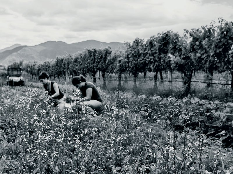 """Seresin Estate defines itself as """"a New World winery with an Old World approach,"""" making its wines in the most natural way possible. Photograph: Justyna Hrabska for Seresin Estate"""