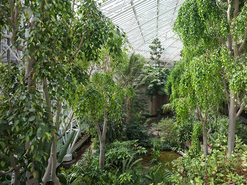 The conservatory at the Barbican is home to exotic fish and more than 2,000 species of tropical plants and trees.
