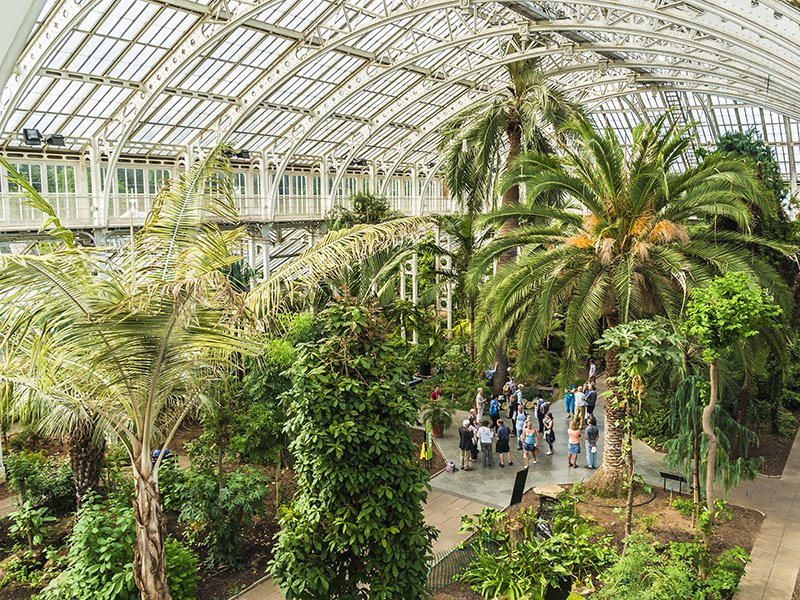 The rainforest climate in the Palm House at Kew Gardens supports the life of palms and other tropical species from around the world. Photograph: Shutterstock