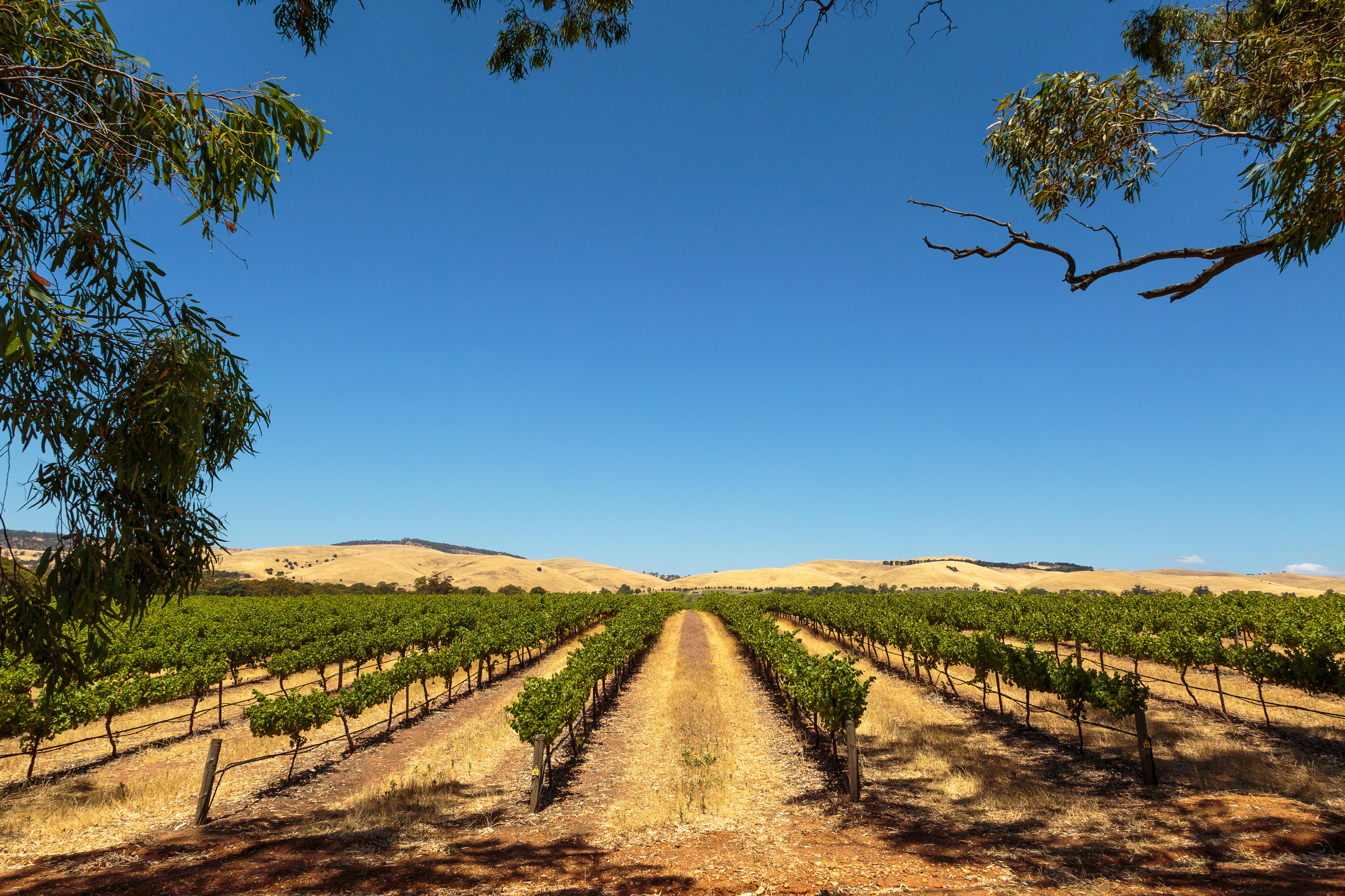Barossa_Valley_Australia_vineyard_gettyimages