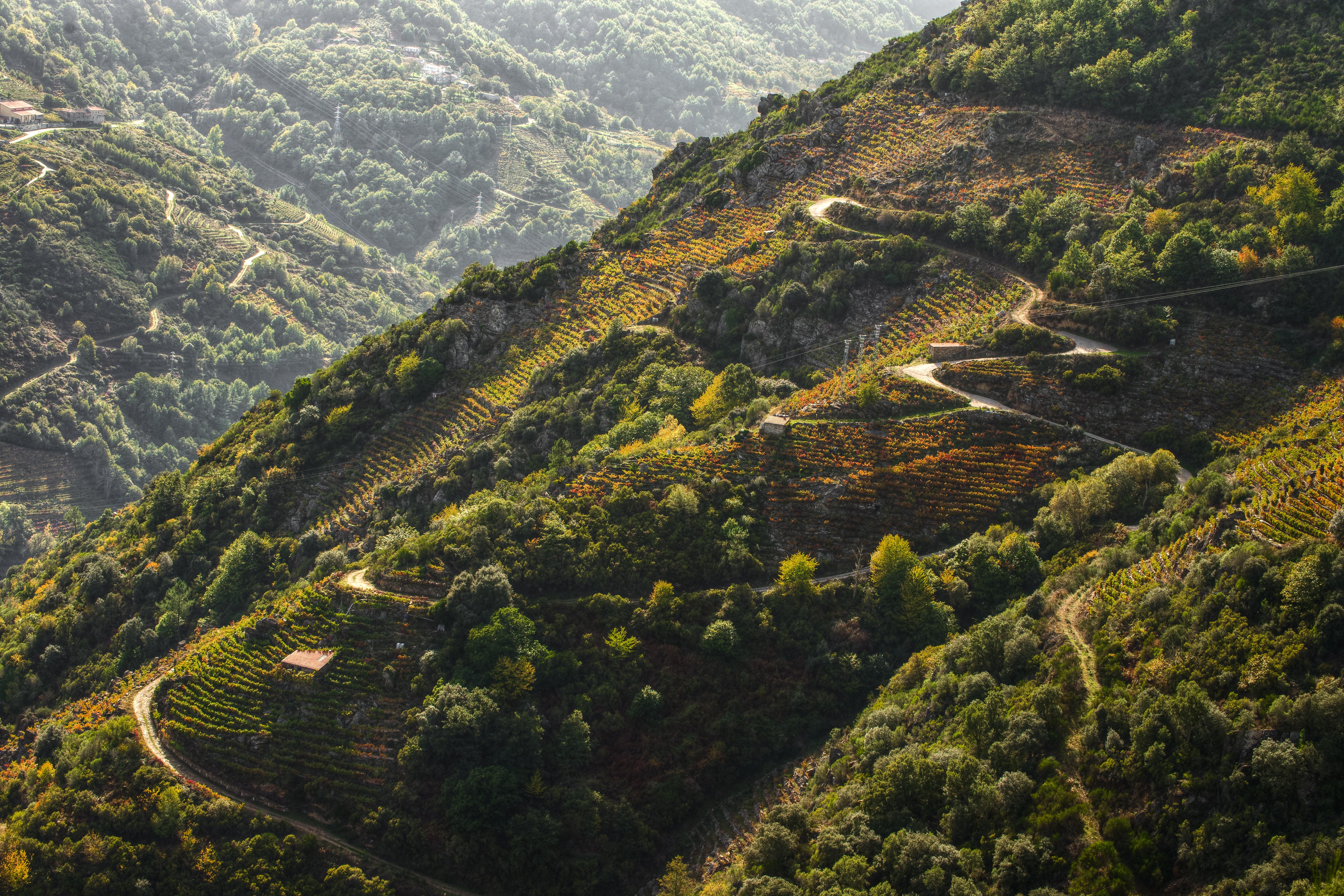 Rias_Baixas_Galicia_Spain_vineyard