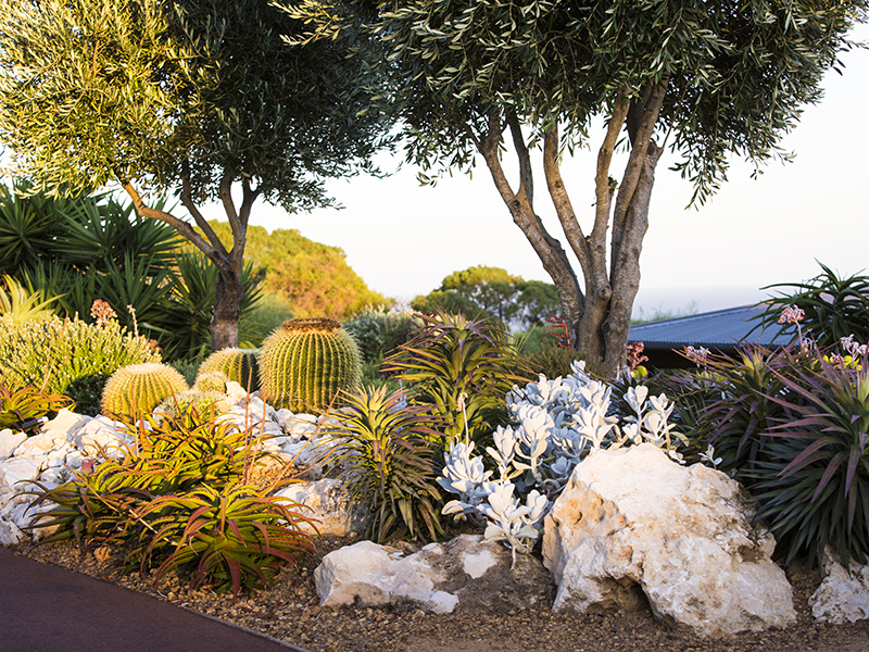 Yallingup cacti garden Australia