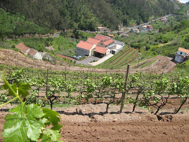 Winery in vineyard