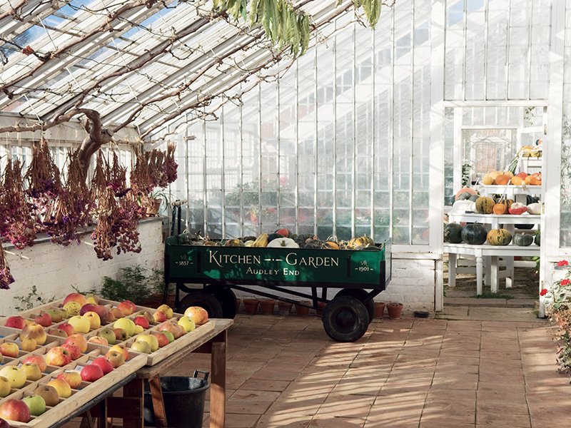 Apples and hanging flowers in vine house