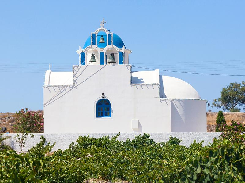 vineyard Santorini Greece.