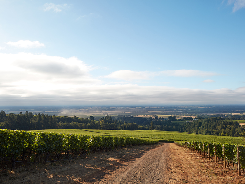 Oregon, a fairly new Pinot Noir-producing region