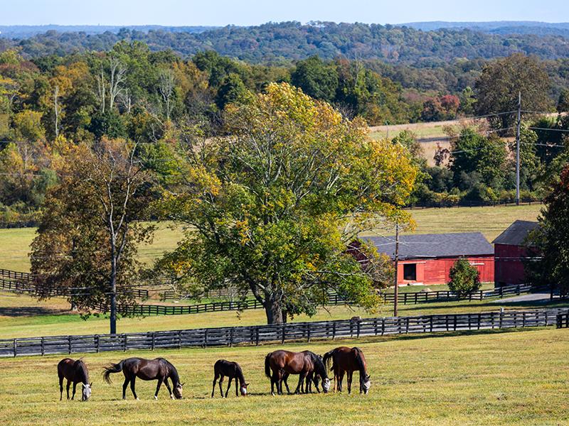 Stonewall horse farm