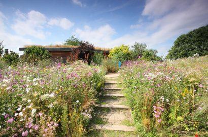 Nature vs Nurture: How to Rewild Your Garden