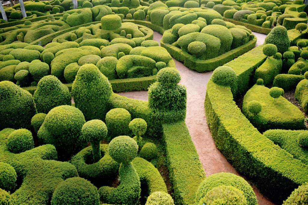 Organic Artistry How Topiary Can Transform Your Garden Design