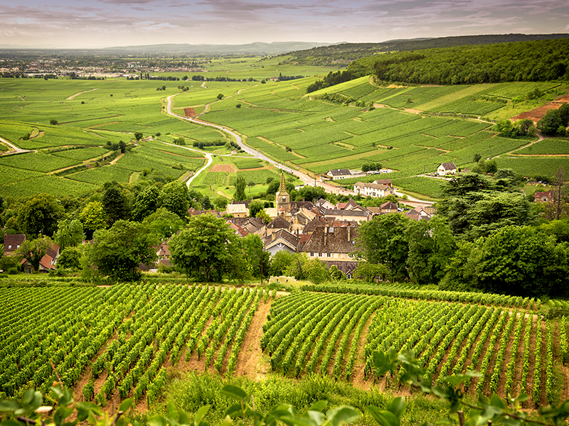 Burgundy in France produces some of the world's finest wines to invest in