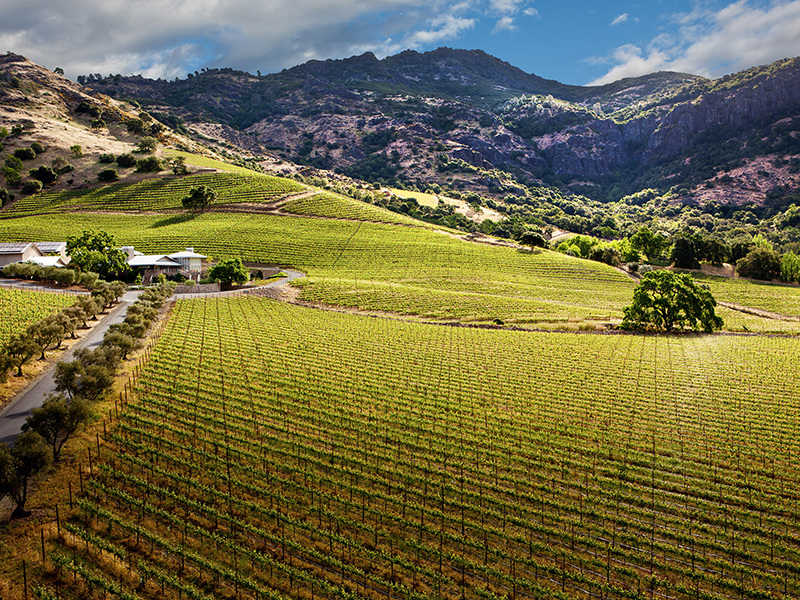 The hillsides surrounding Shafer Vineyards in Napa Valley, California