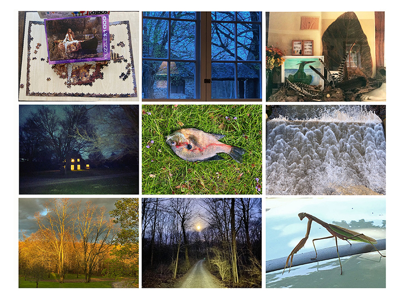 A grid of nature photography taken by Annie Leibovitz
