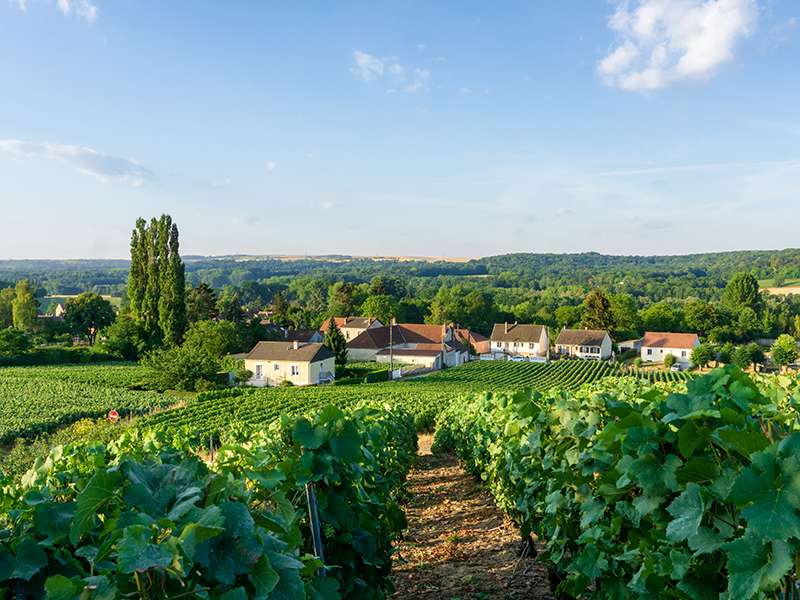The town of Montagne de Reims in the distance beyond grape vines