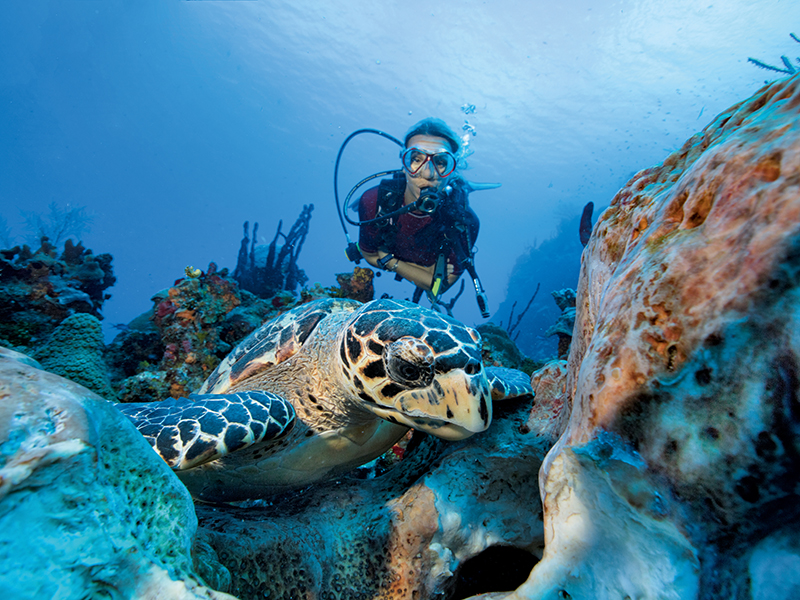 Scuba diver near a Hawksbill turtle off Grand Cayman