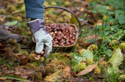 Mindful Food: How to Go Foraging for Plants in Your Backyard
