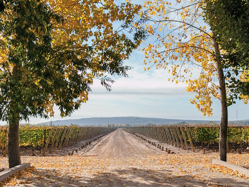 The vineyards and trees of Finca La Perla