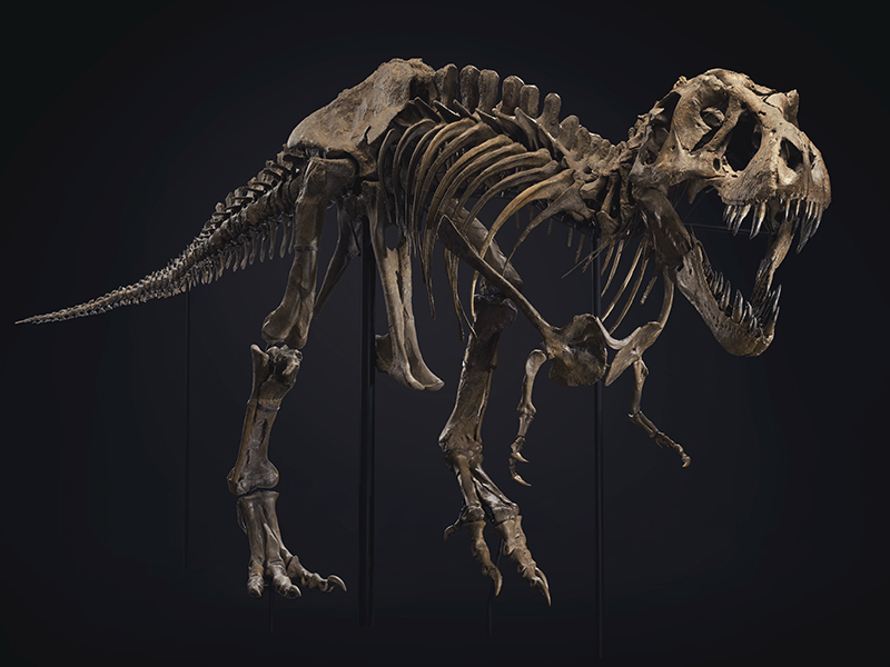 A full view of Stan the Dinosaur