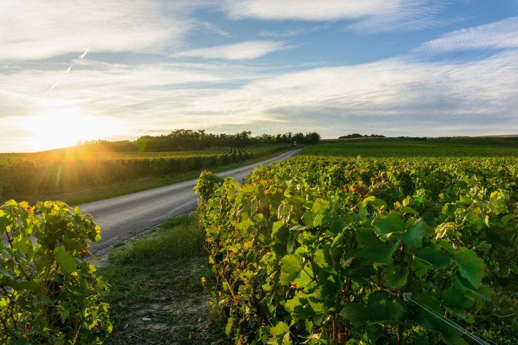 How 3 of the World's Best Wine Regions are Reemerging