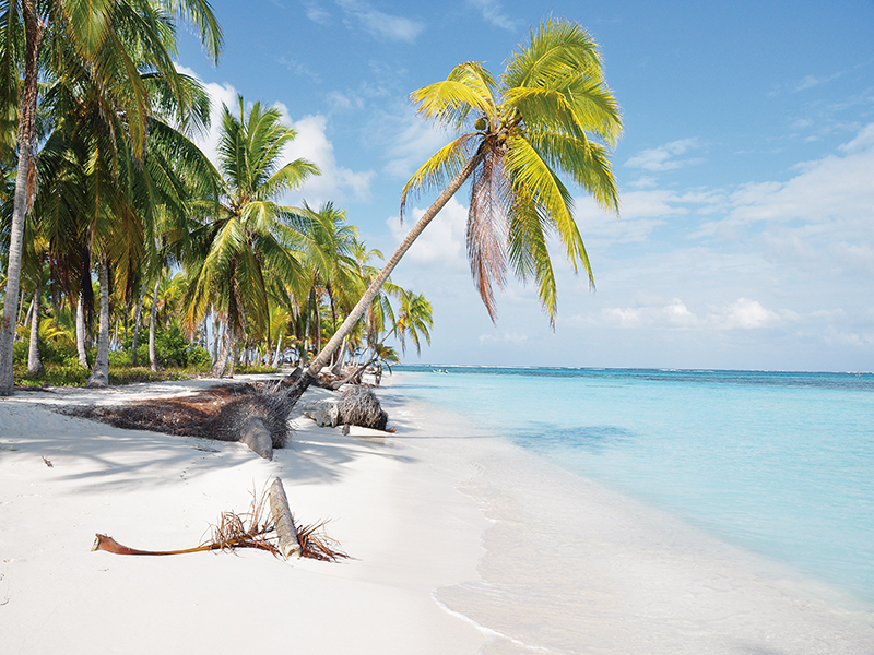 A palm tree on a white sandy beach is the dream when it comes to buying a private island