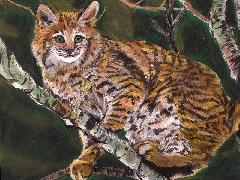 A pastel drawing of a wild cat
