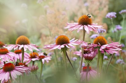 Why Wildlife Gardens are the New Eco Must-Have for Your Home