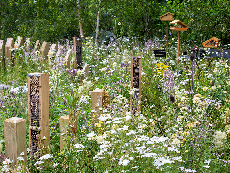 A wildlife garden filled with natural flowers and a variety of bug hotels