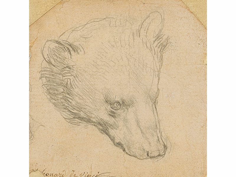 A drawing of a head of a bear by Leonardo da Vinci on sale at Christe's Exceptional Sale