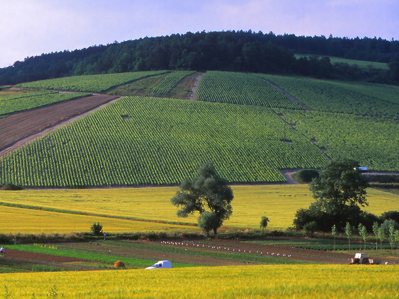 Vineyards in the Chablis area of Burgundy, France