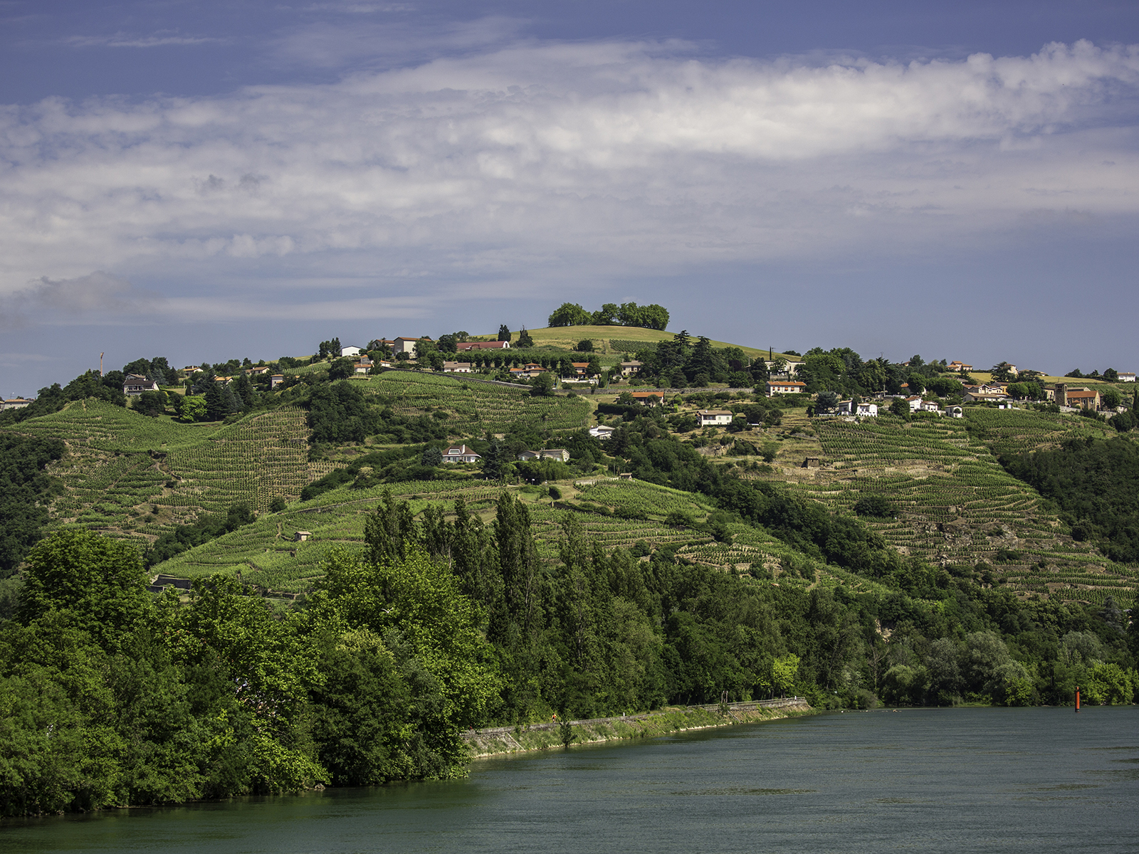 Rhone River and Vineyards in city of Condrieu, Rhone-Alpes, France.