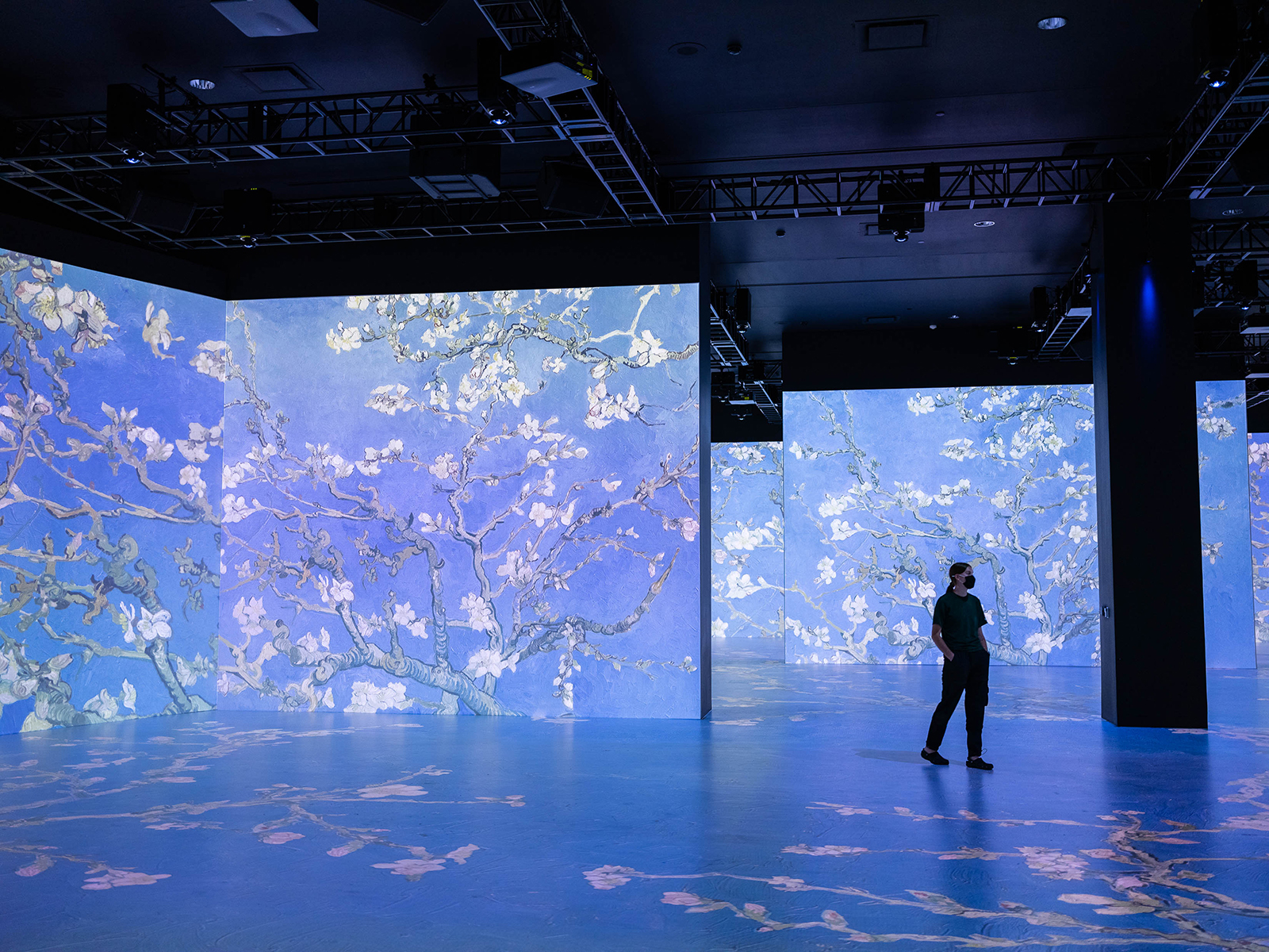 Van Gogh's blossom paintings projected onto large screens and the floor