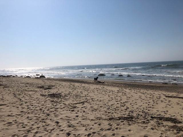9. Single Family Home 용 매매 에 Montauk Oceanfront Paradise, 36 acres of Private Land Montauk, 뉴욕,11954 미국