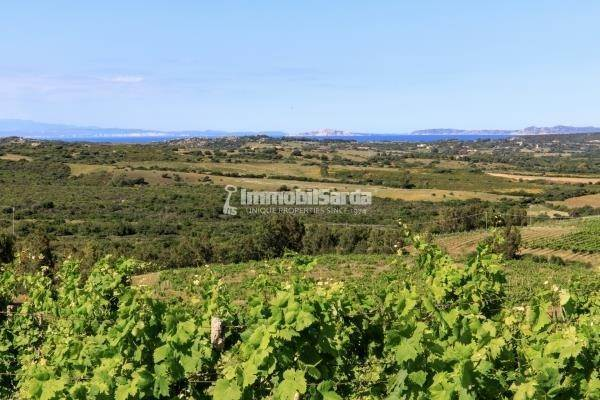 Vineyard pour l à vendre à Exceptional Seafront Vineyard Estate with Bio Farm of 160 ha - Trophy Asset Aglientu, Sardinia 07028 Italie