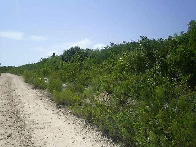Land/Lot for Sale at Ideal Investment Property Long Island, Bahamas
