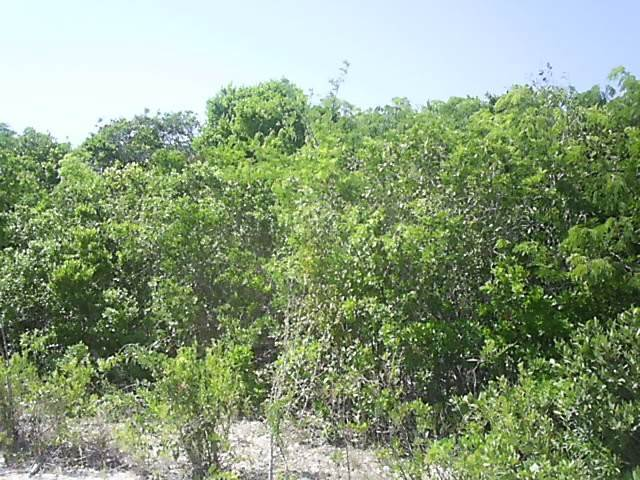 3. Land/Lot for Sale at Ideal Investment Property Long Island, Bahamas