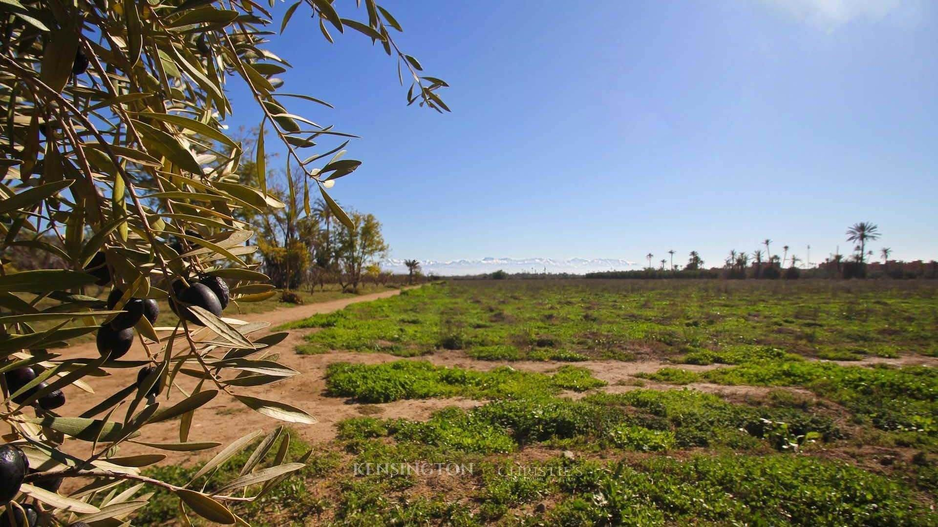 Land/Lot for Sale at Plot Allal Marrakesh, Marrakech,40000 Morocco