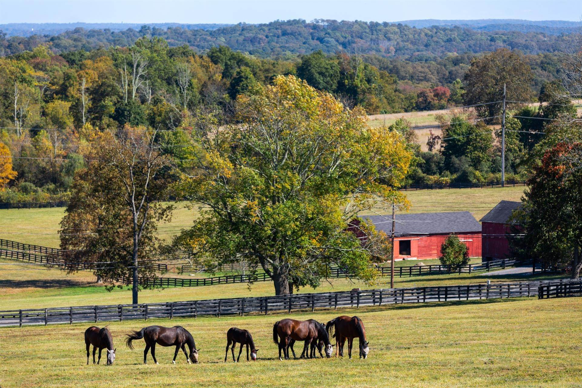 43. Horse Property for Sale at Stonewall Farm, A Magnificent 740 Acre Estate in Westchester County New York, United States